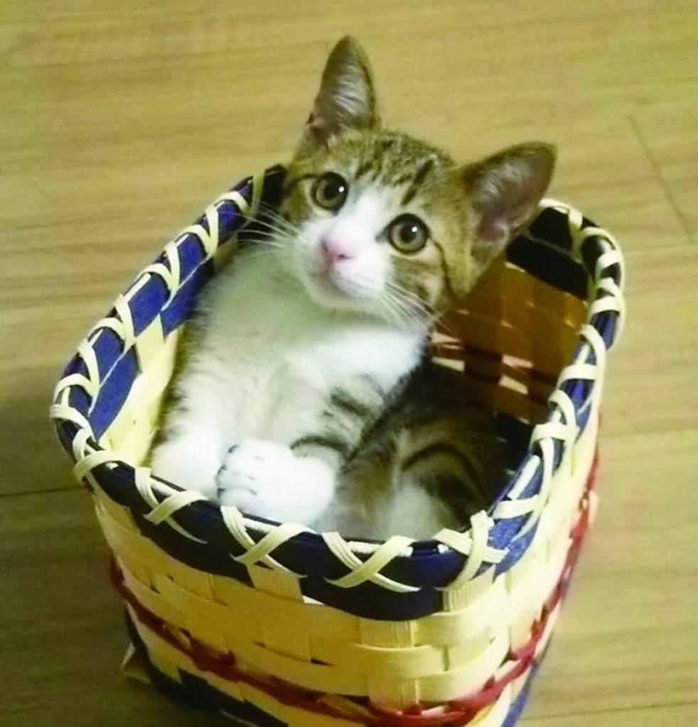 うなぎが子猫だった頃。