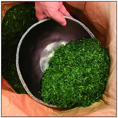 加工前の茶葉の写真