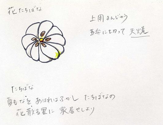 菓銘「花たちばな」の考案図