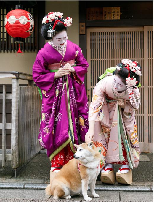 西村の舞妓さんと柴犬のチロ
