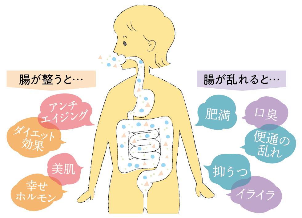 腸内フローラの図