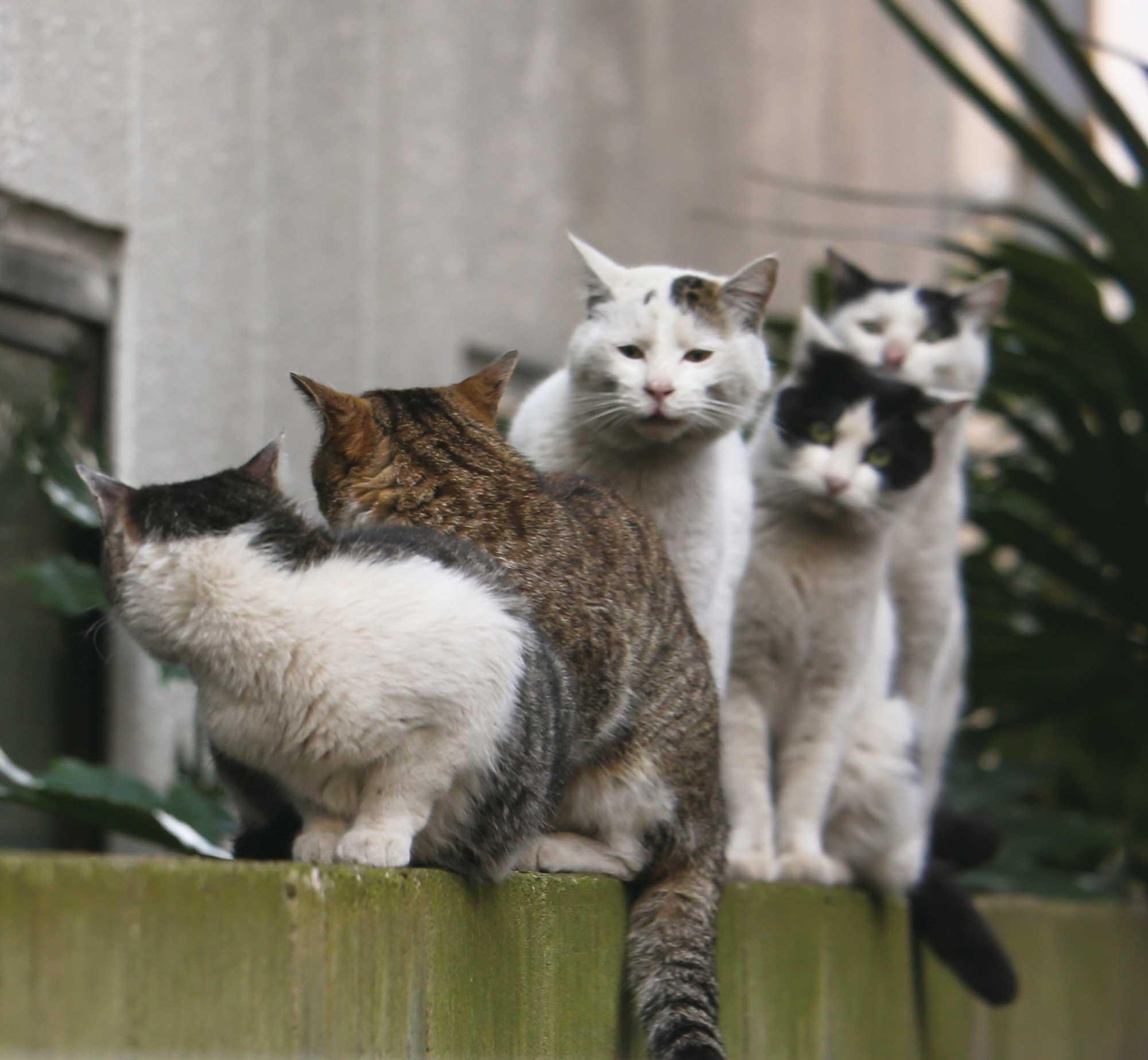"""沖さんの代表カット""""ねこザイル""""。 <br> 手前の2匹が後ろに何かを伝えようとしている?"""