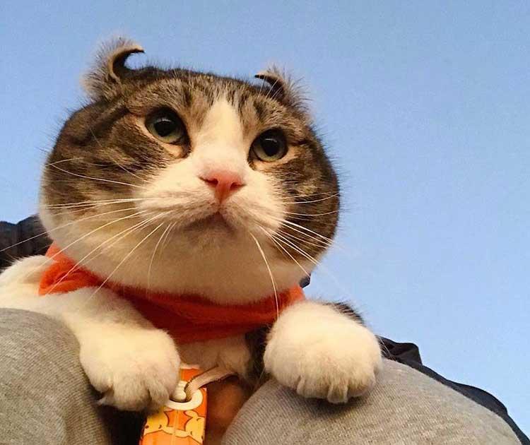 人気猫Snow