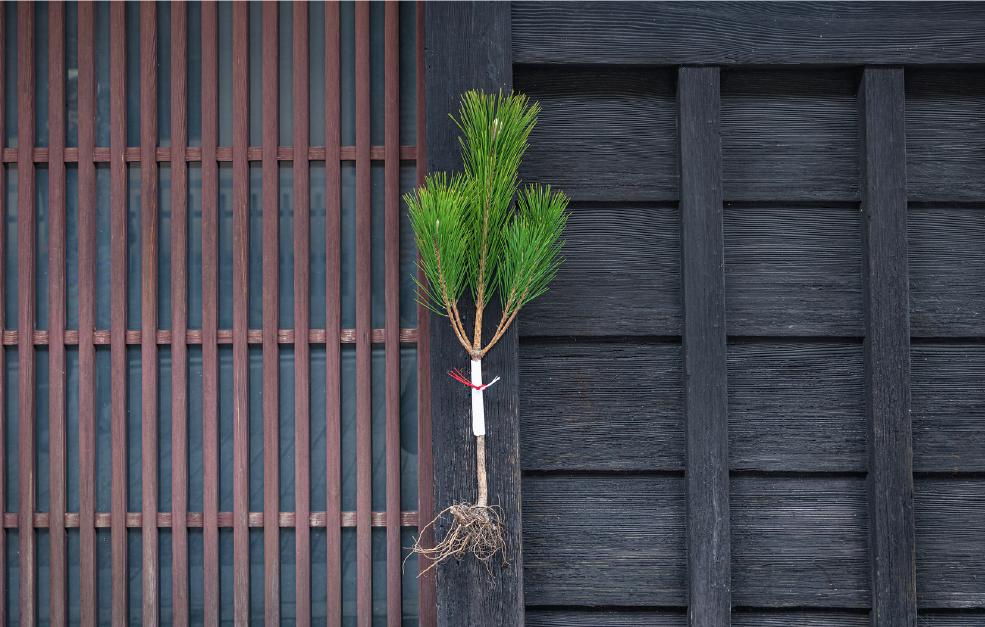 地に足がつき成長し続けるように、という願いを込めた「根引松」は、京都伝統の正月飾り。